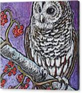 Barred Owl And Berries Canvas Print