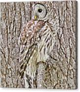 Barred Owl Camouflage Canvas Print