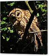 Barred Owl  Hello Canvas Print