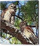 Barred Owl Pair Canvas Print