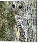 Barred Owl Peek A Boo Canvas Print