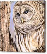 Barred Owl Watch Canvas Print
