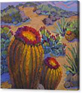 Barrel Cactus In Warm Light Canvas Print