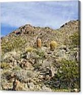 Barrel Cactus Canvas Print