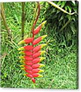 Barriles Heliconia Canvas Print
