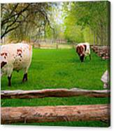 Barrington Farm Bovine Canvas Print