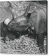 Basel World-record In Rhinoceros Breeding Canvas Print