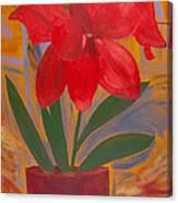 Basement Amaryllis Canvas Print