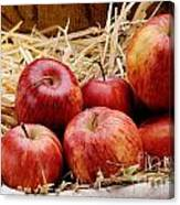 Basket Of Delicious Red Apples Canvas Print