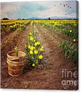 basket with Daffodils Canvas Print