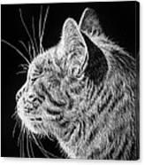 Basking II Canvas Print