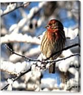Basking In Winter Light Canvas Print