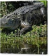 Basking On The Bank Canvas Print