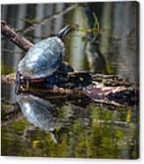 Basking Turtle Canvas Print