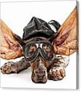 Basset Hound Dog Aviator Canvas Print