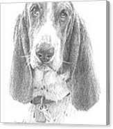 Basset Hound Pencil Portrait Canvas Print