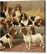 Basset Hounds In A Kennel Canvas Print