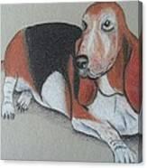 Bassett Puppy Canvas Print
