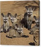 Bat-eared Fox Pups Canvas Print