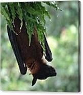 Bat In The Rain Canvas Print