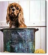 Bath Time - King Charles Spaniel Canvas Print