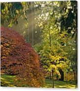 Bathed In Morning Light Canvas Print