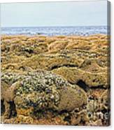 Sabellariid Worm Reef  Canvas Print