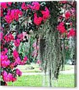 Baton Rouge Louisiana Crepe Myrtle And Moss At Capitol Park Canvas Print