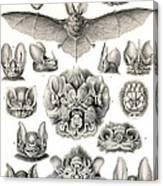Bats Bats And More Bats Canvas Print