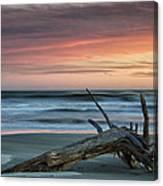 Battered Driftwood Canvas Print