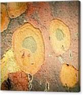 Battered Not Beaten Canvas Print