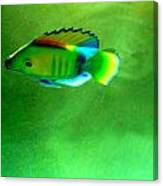 Battery Operated Fish Canvas Print