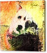 Baxter Canvas Print