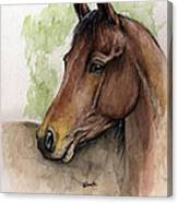 Bay Horse Portrait Watercolor Painting 02 2013 A Canvas Print