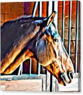 Bay In Stall Canvas Print