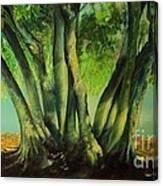Bay Leaves Tree Canvas Print