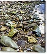 Bay Of Fundy Shoreline Canvas Print