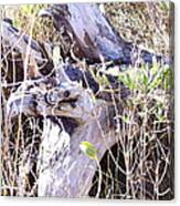Bayberry And Driftwood Canvas Print