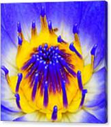 Blue Brilliance Number Two Canvas Print