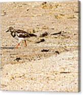 Beach Bird 2 Canvas Print