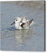 Beach Bird Bath 4 Canvas Print