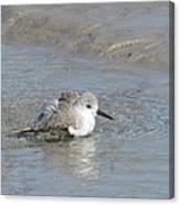 Beach Bird Bath 5 Canvas Print