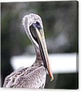 Beach Bum - Pelican Canvas Print