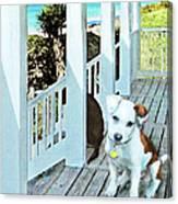 Beach Dog 1 Canvas Print