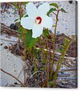 Beach Flower Canvas Print