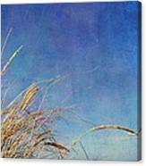 Beach Grass In The Wind Canvas Print