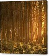 Beach Light Through The Trees Canvas Print