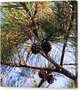Beach Pine Canvas Print