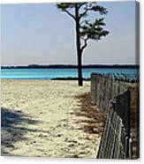 Beach Pine Canvas Print