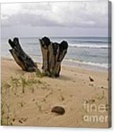 Beach Scenery Canvas Print